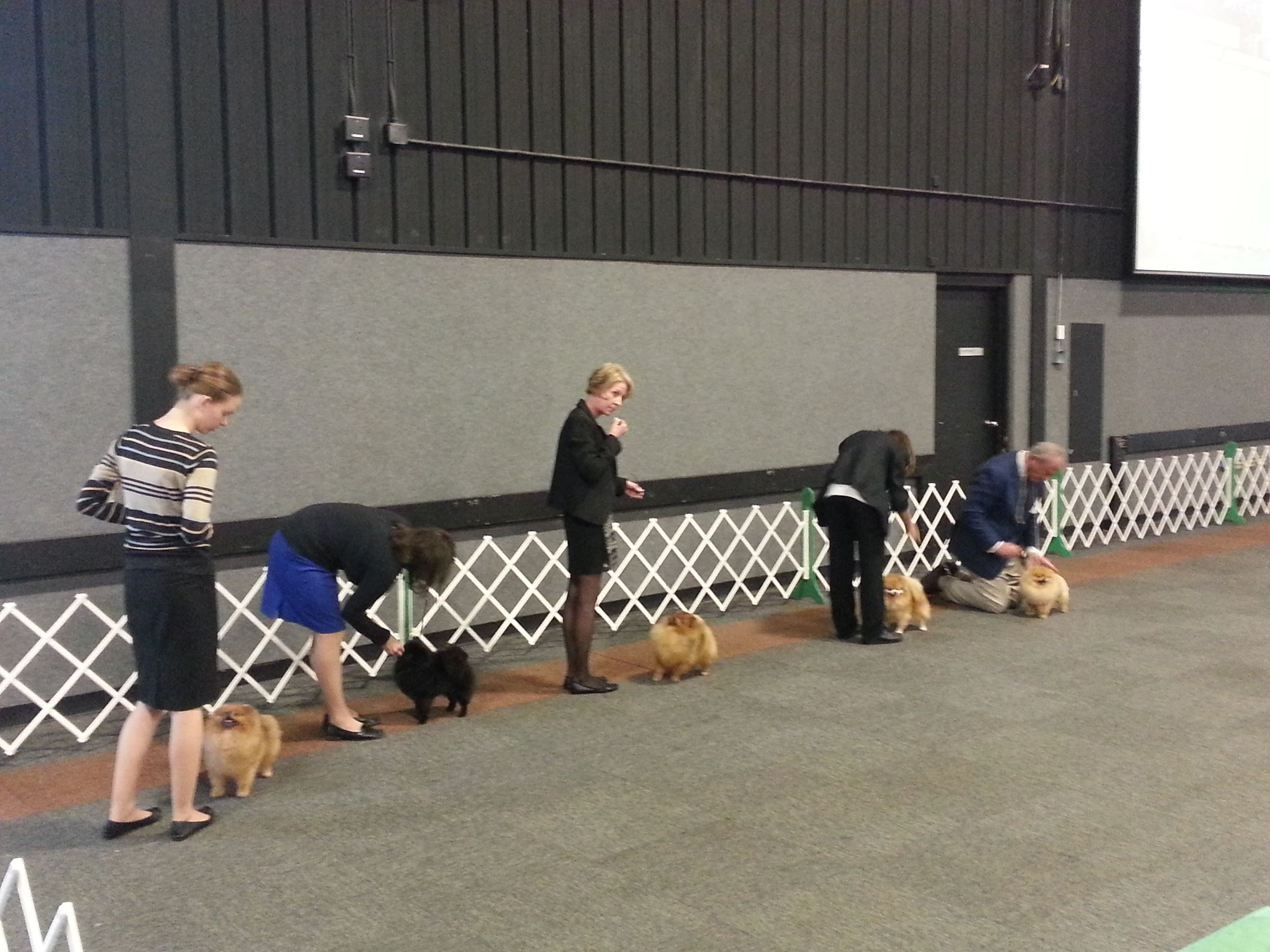 Photos At Valparaiso Kennel Club AKC Dog Show